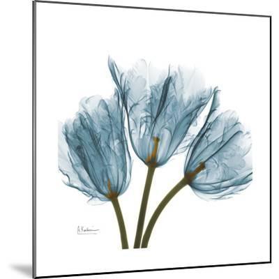 Tulips Blue-Albert Koetsier-Mounted Premium Giclee Print