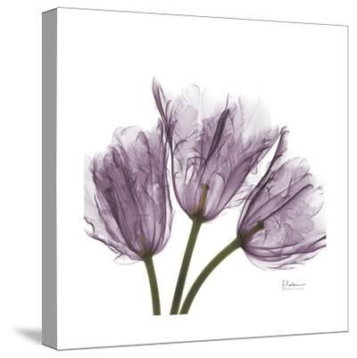 Tulips Lavender-Albert Koetsier-Stretched Canvas Print