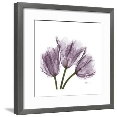 Tulips Lavender-Albert Koetsier-Framed Premium Giclee Print