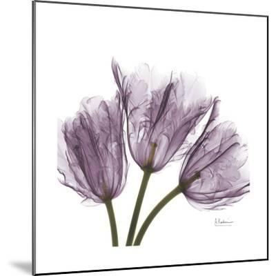 Tulips Lavender-Albert Koetsier-Mounted Premium Giclee Print
