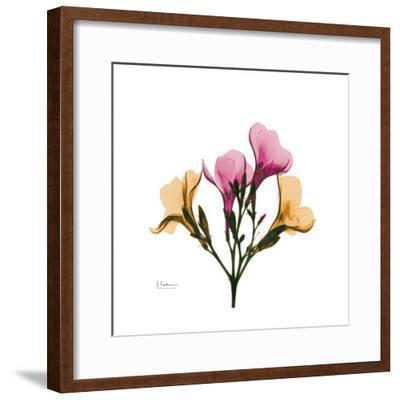 Oleander Portrait-Albert Koetsier-Framed Art Print
