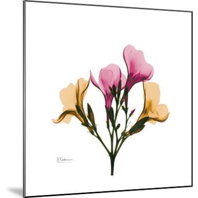 Oleander Portrait-Albert Koetsier-Mounted Art Print