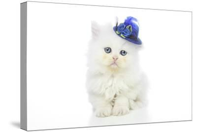 Kittens 005-Andrea Mascitti-Stretched Canvas Print