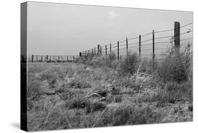 Tumbleweed Fences and Sheep-Amanda Lee Smith-Stretched Canvas Print