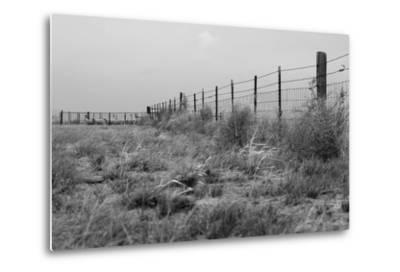 Tumbleweed Fences and Sheep-Amanda Lee Smith-Metal Print