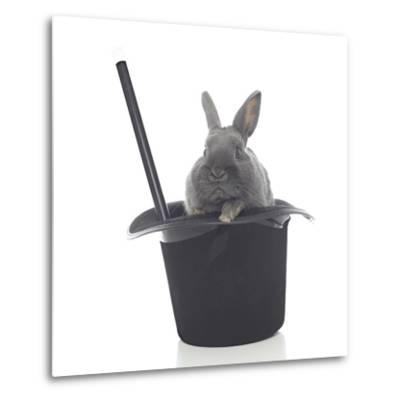 Rabbits 002-Andrea Mascitti-Metal Print