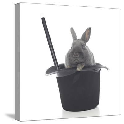 Rabbits 002-Andrea Mascitti-Stretched Canvas Print