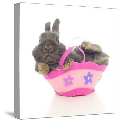 Rabbits 003-Andrea Mascitti-Stretched Canvas Print