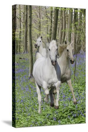Fantasy Horses 06-Bob Langrish-Stretched Canvas Print