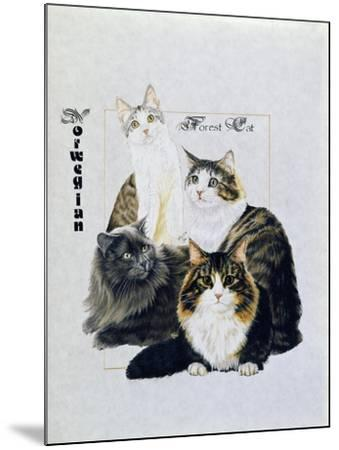 Norwegin Forest Cat-Barbara Keith-Mounted Giclee Print