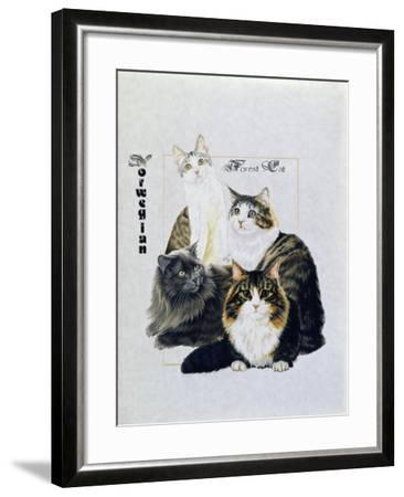 Norwegin Forest Cat-Barbara Keith-Framed Giclee Print