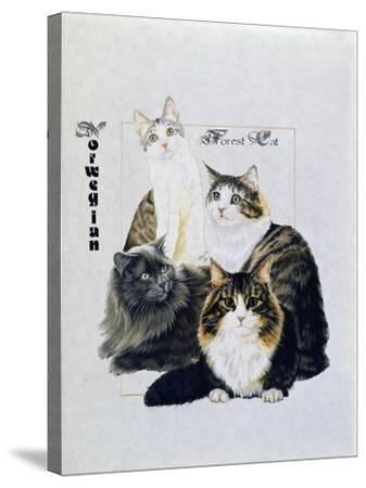 Norwegin Forest Cat-Barbara Keith-Stretched Canvas Print