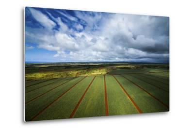 Pineapple Fields-Cameron Brooks-Metal Print