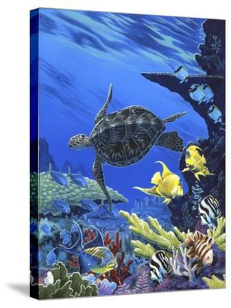 Treasures of the Sea I-Apollo-Stretched Canvas Print