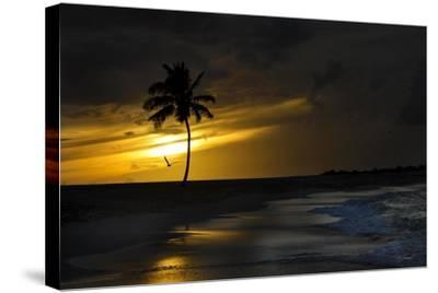 Journey's End-Barbara Simmons-Stretched Canvas Print