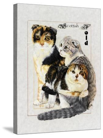 Scottish Fold-Barbara Keith-Stretched Canvas Print