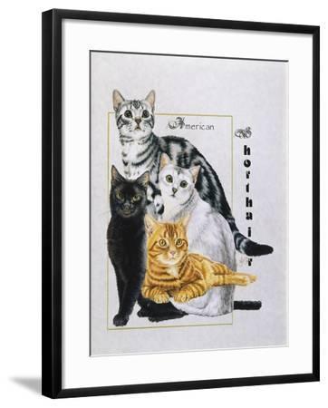 American Shorthair-Barbara Keith-Framed Giclee Print