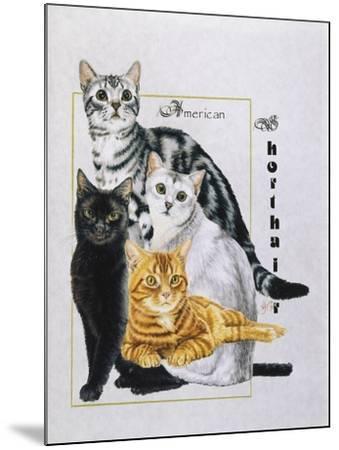 American Shorthair-Barbara Keith-Mounted Giclee Print