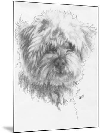Maltipoo-Barbara Keith-Mounted Giclee Print