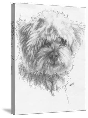 Maltipoo-Barbara Keith-Stretched Canvas Print