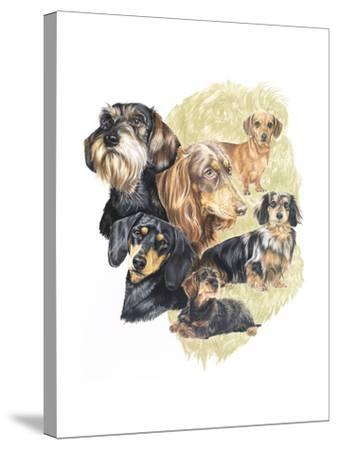 Dachshund-Barbara Keith-Stretched Canvas Print