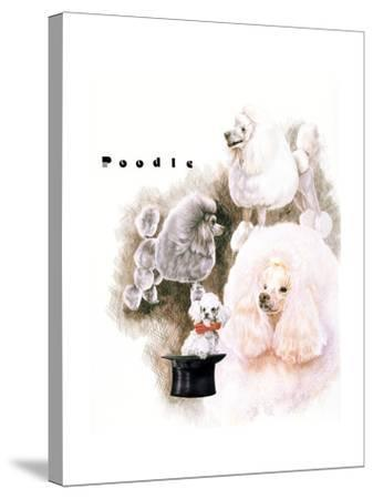 Poodle 2-Barbara Keith-Stretched Canvas Print