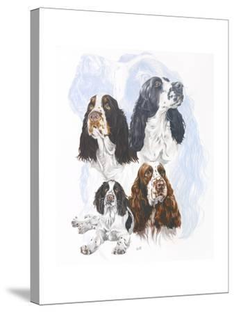 Springer Spaniel-Barbara Keith-Stretched Canvas Print