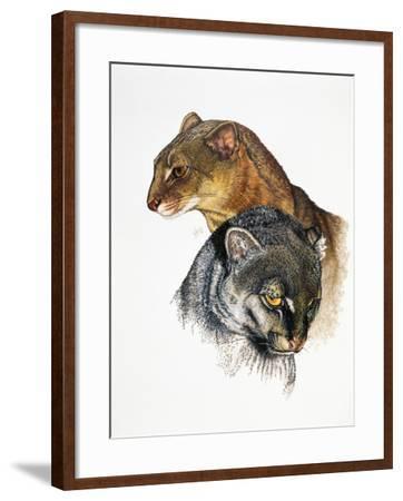 Jaguarundi-Barbara Keith-Framed Giclee Print