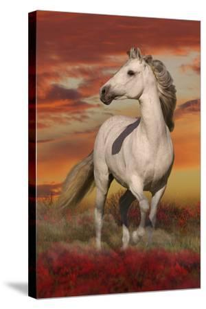 Fantasy Horses 38-Bob Langrish-Stretched Canvas Print