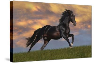 Fantasy Horses 40-Bob Langrish-Stretched Canvas Print