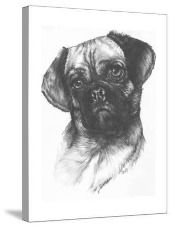 Puggle-Barbara Keith-Stretched Canvas Print