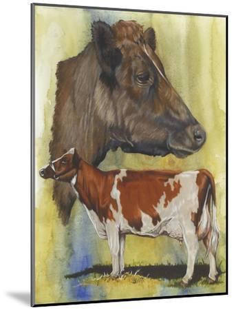 Ayrshire Cows-Barbara Keith-Mounted Giclee Print