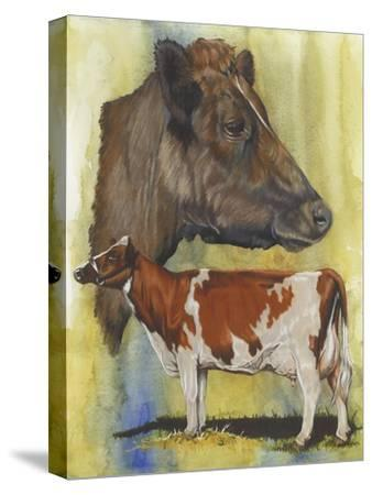 Ayrshire Cows-Barbara Keith-Stretched Canvas Print