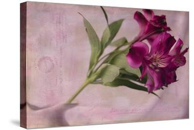 Forever Fuchsia-Bob Rouse-Stretched Canvas Print