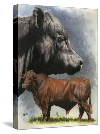 Angus Cattle-Barbara Keith-Stretched Canvas Print
