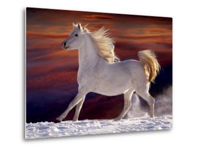 Fantasy Horses 17-Bob Langrish-Metal Print