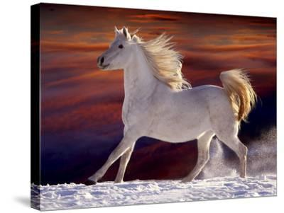 Fantasy Horses 17-Bob Langrish-Stretched Canvas Print