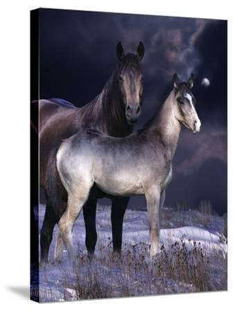 Fantasy Horses 27-Bob Langrish-Stretched Canvas Print