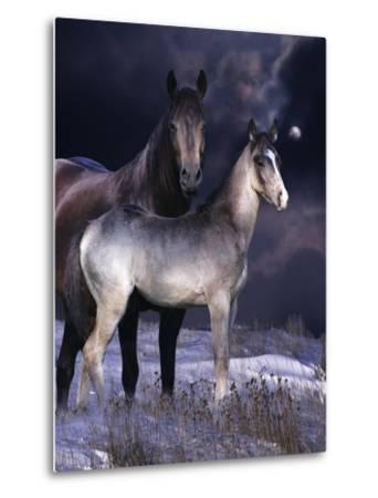 Fantasy Horses 27-Bob Langrish-Metal Print