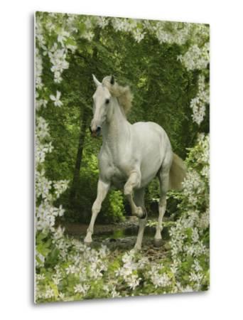 Fantasy Horses 23-Bob Langrish-Metal Print