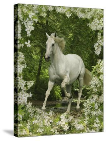 Fantasy Horses 23-Bob Langrish-Stretched Canvas Print