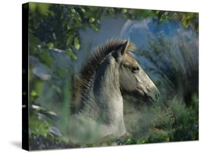 Fantasy Horses 30-Bob Langrish-Stretched Canvas Print