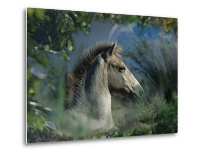 Fantasy Horses 30-Bob Langrish-Metal Print