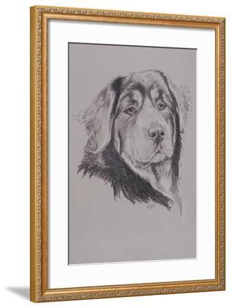 Tibetan Mastiff-Barbara Keith-Framed Giclee Print