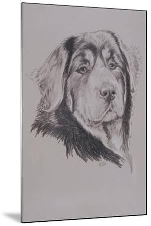 Tibetan Mastiff-Barbara Keith-Mounted Giclee Print