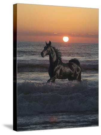 Shadow Walker-Bob Langrish-Stretched Canvas Print