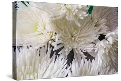 Blooming White-Bob Rouse-Stretched Canvas Print
