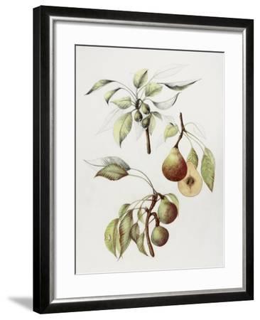 Pine Street Pears-Deborah Kopka-Framed Giclee Print