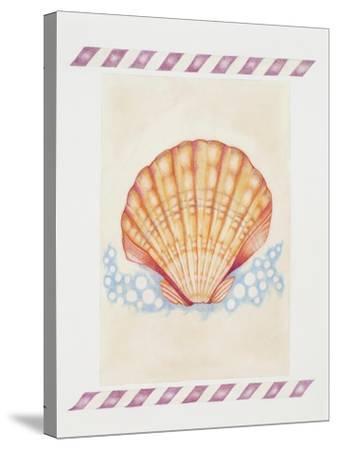 Shell Cardita-Deborah Kopka-Stretched Canvas Print