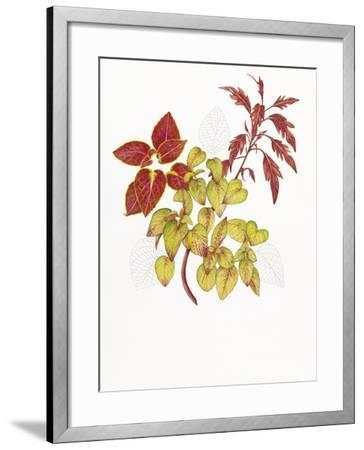 Coleus Collage-Deborah Kopka-Framed Giclee Print